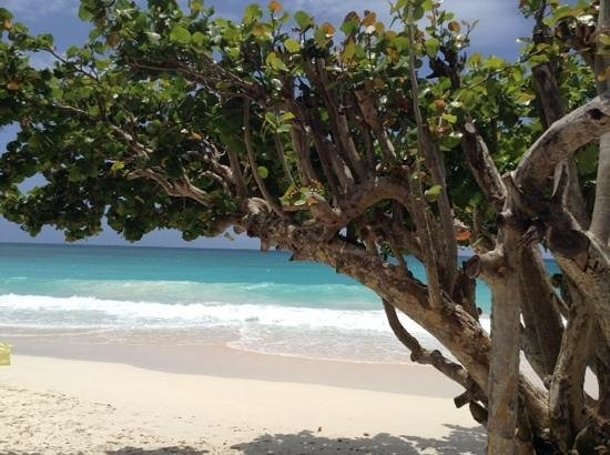 Bougainvillea Barbados: Beautiful Beach