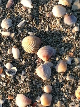 Shoreline Island Resort : Shells on the beach