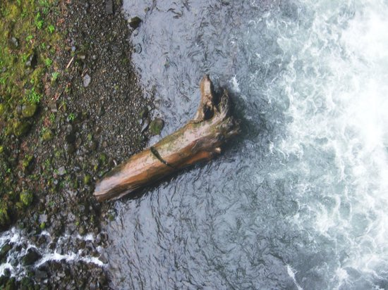 Cataratas Multnomah: Log the size of a school bus that came over the falls