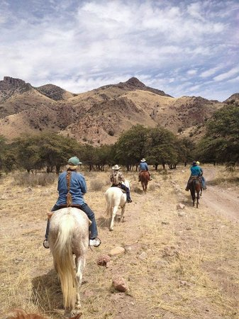 D.D. Gamble Guest Lodge and Ranch : Trail Riding
