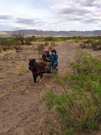 D.D. Gamble Guest Lodge and Ranch : Driving Mini Horses