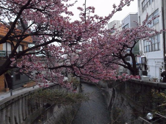 Itokawa Path : 糸川に被さるように咲いています