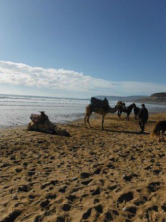 Taghazout Beach : la plage et possibilité de faire des ballades