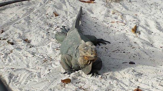 Segway Eco-Tour : Iguana Enclosure