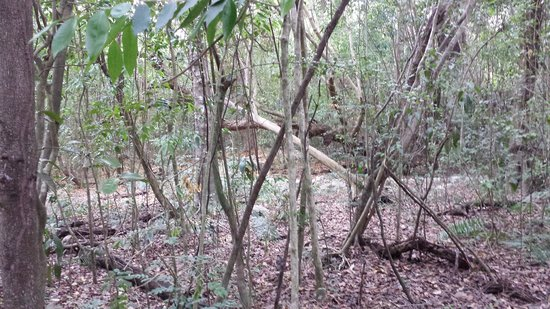 Puntacana Ecotours : Walk through Forest
