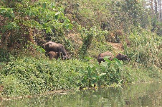 Mae Malai Elephant Training Camp : Local residents