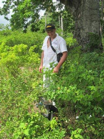 Jozani Forest Reserve : Колобусы почти не боятся