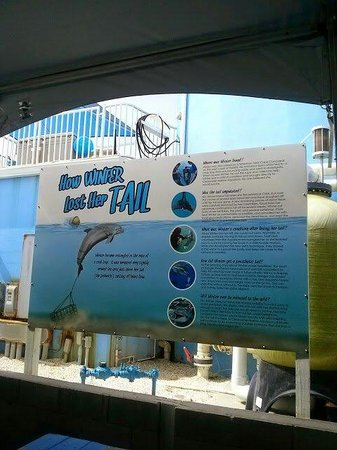 Clearwater Marine Aquarium : Winter s story