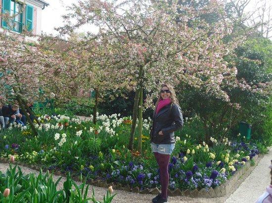 Maison et jardins de Claude Monet : Fondation Claude Monet - Tulipas