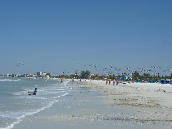 Pointe Estero Resort: Strand