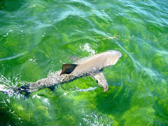 True Island Adventures: Shark!