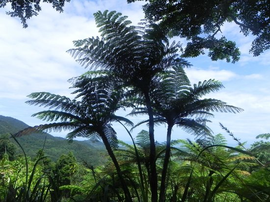 Daintree Tours: High above the rainforest