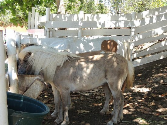 Arecibo Lighthouse & Historical Park : Pony