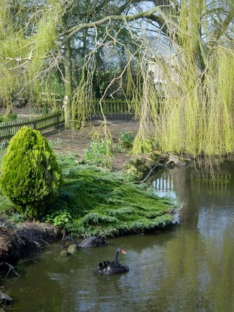 Albright Hussey Manor Hotel: Beautiful moat with the black swans