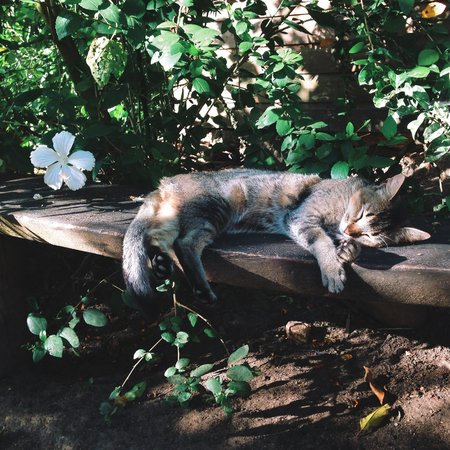 Martz Farm Treehouses and Cabanas Ltd.: Adorable cat and beautiful flower