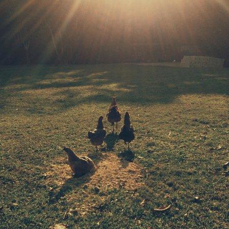 Martz Farm Treehouses and Cabanas Ltd.: Chicks, am I right?