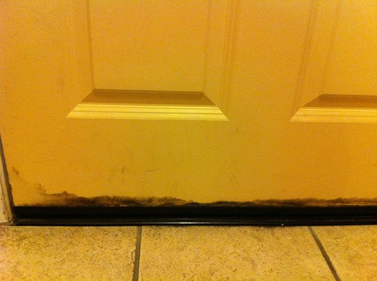 Quality Inn San Simeon: mold on bottom of front door