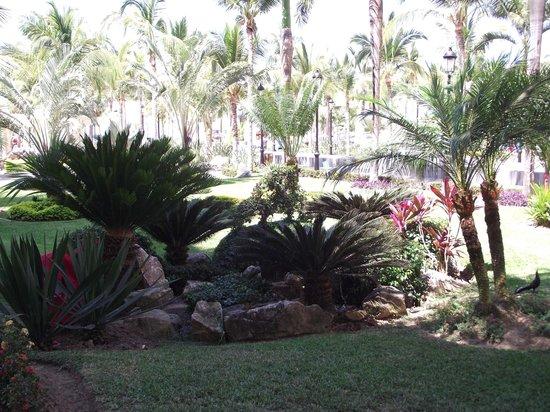 Hotel Riu Vallarta : Grounds