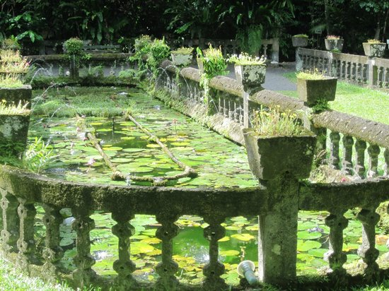 Paronella Park : the evocative lily pond