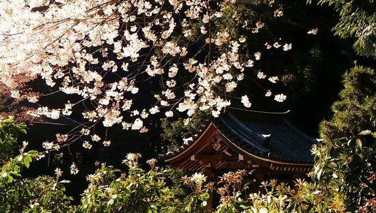 Nitobe Memorial Garden: blossoms and roof