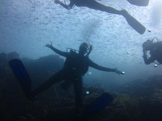 Dive Center Silberstein: under the sea