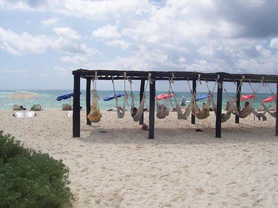 Faro Celerain Ecological Reserve : Hammock heaven