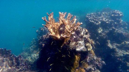 Brisas Sierra Mar Hotel: Magnifiques coraux mais pas beaucoup de poissons