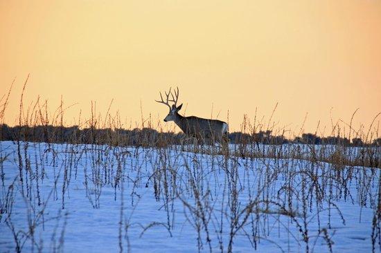 Antelope Island State Park : Deer