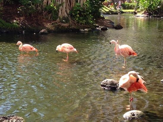 Westin Maui Resort And Spa: 2