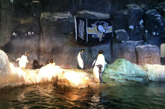 Pittsburgh Zoo & PPG Aquarium: Penguins