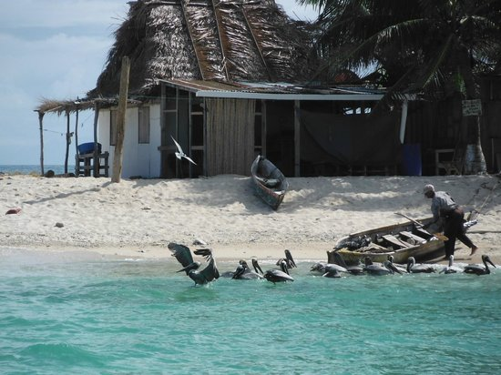 Ruthless Roatan Charters: Chachuate pelicans checking out the local fishing catch