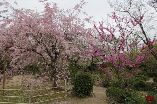 Shukkei-en Garden - Foto de Shukkei-en Garden, Hiroshima ...