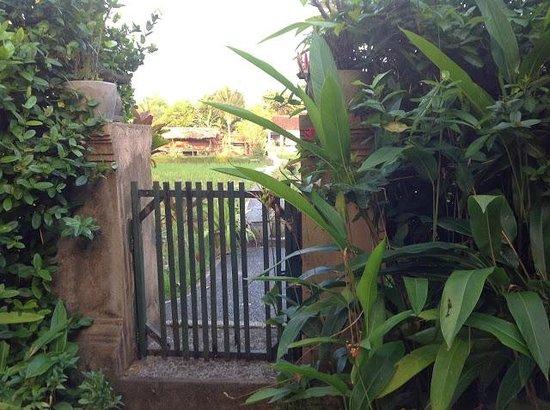 Kebun Indah: Looking from Mangga Madu to rice fields