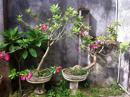 Beneyasa Beach Inn : Quite good garden