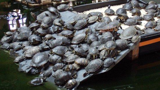 Estación de Atocha: Lleno de tortugas