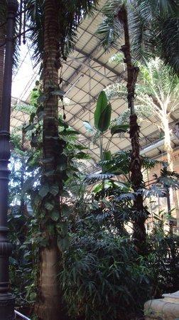 Estación de Atocha: Vegetación interior