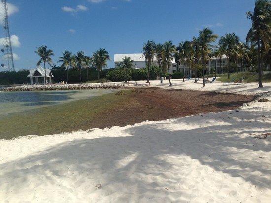 Tranquility Bay Beach House Resort: Gross beach