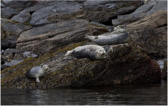 Alaska Saltwater Lodge Small Group Whale Watching, Wildlife & Glacier Tour : Harbor Seals