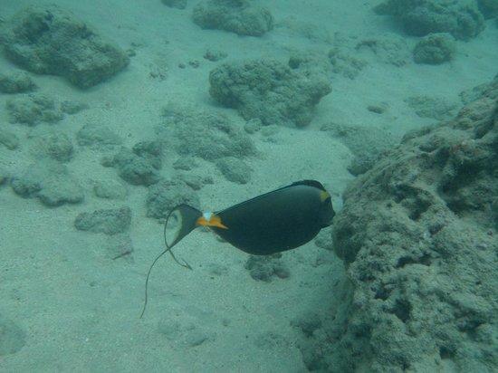 Hanauma Bay Nature Preserve: Pretty Fish