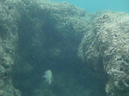 Hanauma Bay Nature Preserve: More Fish everywhere