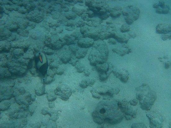 Hanauma Bay Nature Preserve: And more Fish