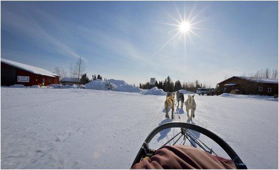Bettles Lodge: Dogsledding