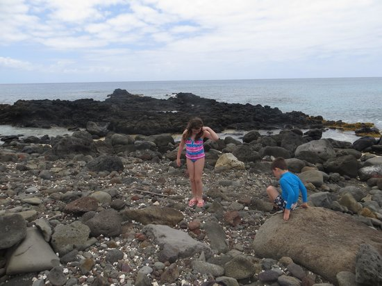 Ka'ena Point State Park: kids sea shell hunting