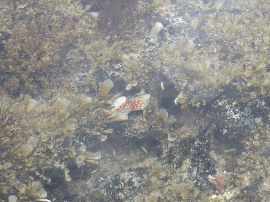 Ka'ena Point State Park: cool coral n fish in a mini pool b4 high tide
