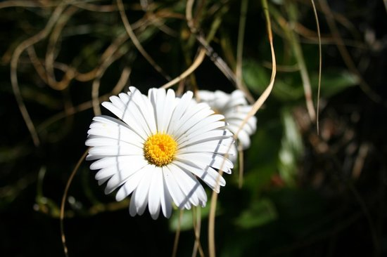 Southern Outdoor Instruction: Daisy on the Kepler Track
