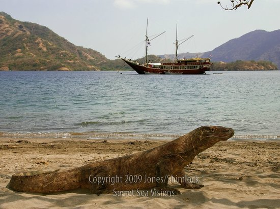 Siam Dive n Sail: The Seven Seas Liveaboard at Komodo, Indonesia