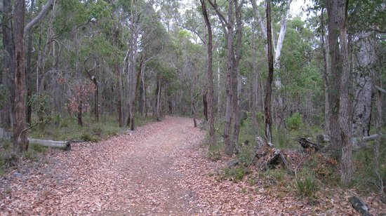 Forest Rise Eco Retreat: Another one of the walks, slightly more wooded and teeming with birds