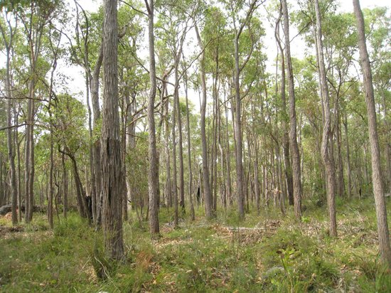 Forest Rise Eco Retreat: View from Sacred Kingfisher front door