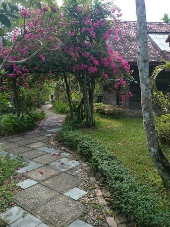 Palm Village Resort & Spa: Pathway to the rooms