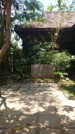 Palm Village Resort & Spa: Trees everywhere